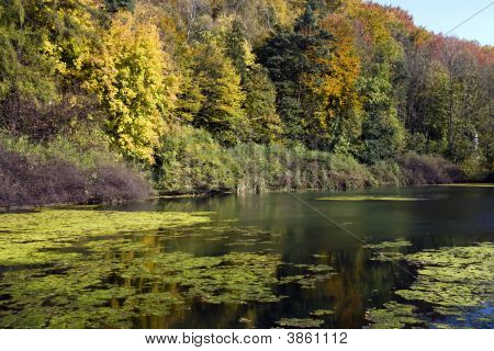 Autunm At The Lake
