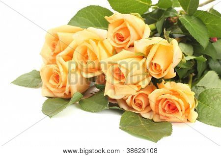 beautiful bouquet of roses and petals isolated on white