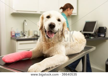 Female Veterinary Surgeon Treating Dog In Surgery