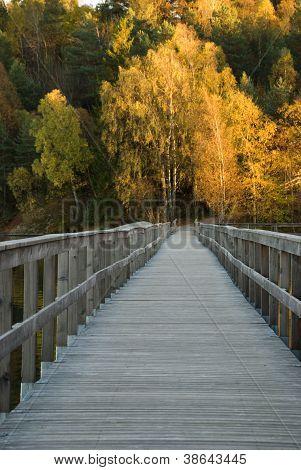 Caminho sobre mar no Outono