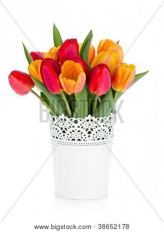 Tulipas vermelhas e laranja em vaso. Isolado no fundo branco