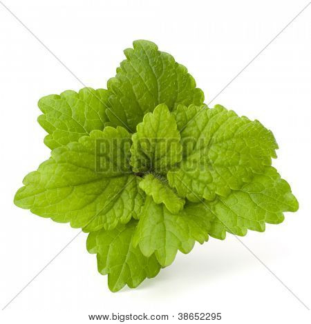 Peppermint or  mint bunch isolated on white background cutout