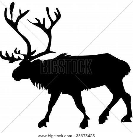 Reindeer_