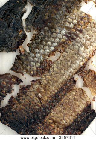 Fish Skin Leather