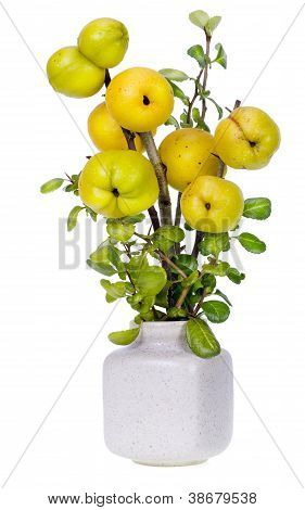 Minimalistic  Bouquet- Japanese Quince Branches