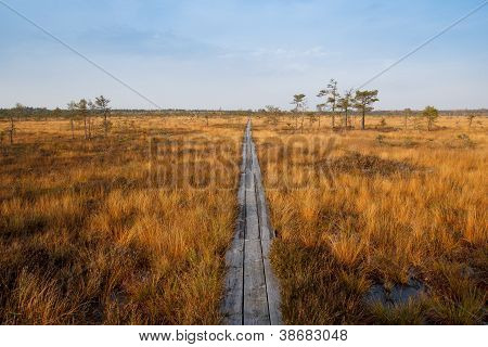 Bog In Sunny Autumn Day