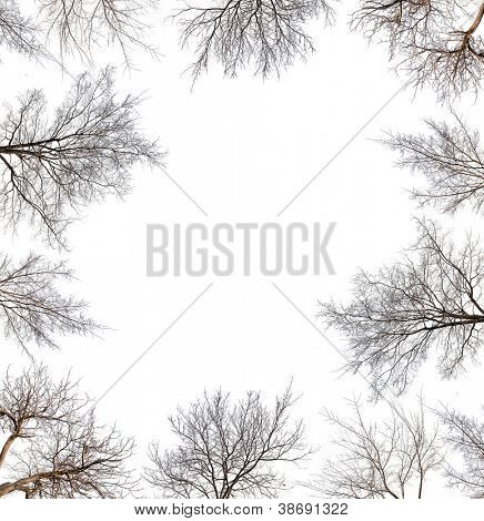 frame from trees without leaves isolated on white background