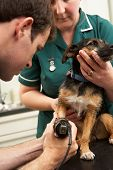 foto of veterinary surgery  - Male Veterinary Surgeon And Nurse Examining Dog In Surgery - JPG