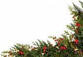 stock photo of greenery  - Christmas traditional border of holly - JPG