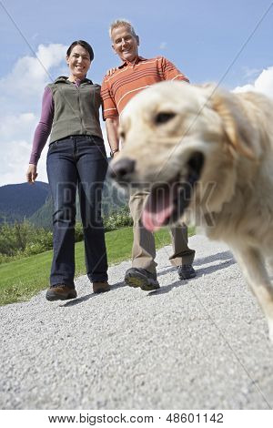 Low angle view of a middle aged couple walking with golden retriever on country road