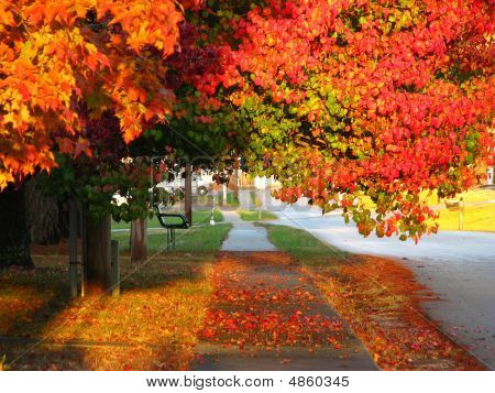 Bench Sidewalk And Fall Trees