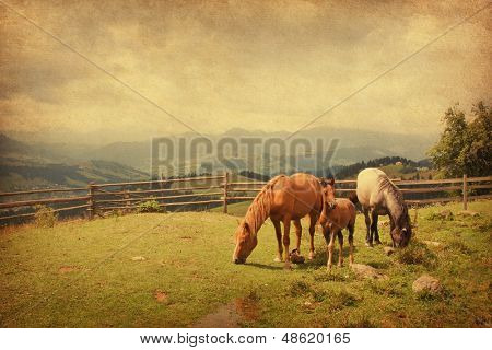 Two horses and foal  in meadow.  Photo in retro style. Paper texture.