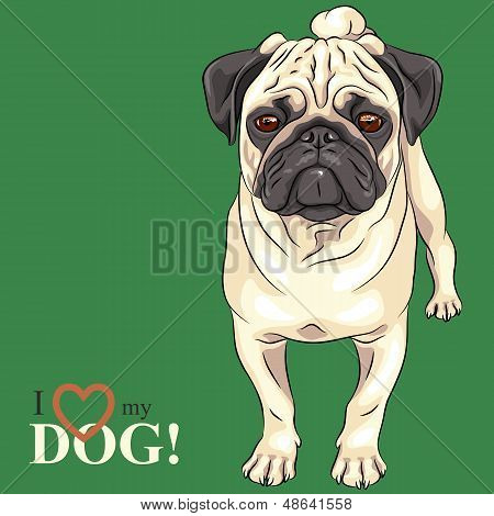 Vector Sketch Serious Dog Fawn Pug Breed