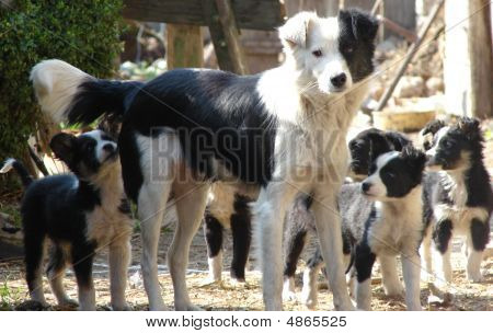 Der Mammy Hund und Welpen