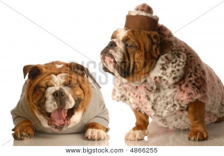 Bulldog Laughing Another Dress In Fur Coat