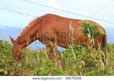 Hawaii Horse