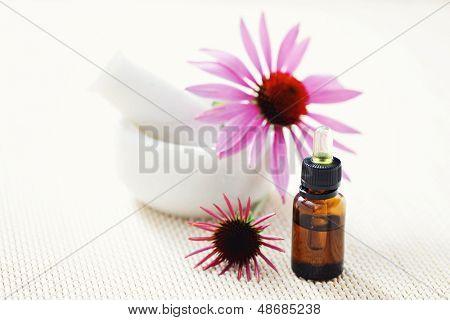 echinacea purpurea alternative medicine - beauty treatment