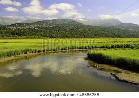 Potters marsh