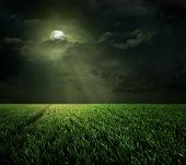 Night and the moon in the meadow