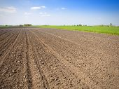 stock photo of plowed field  - plowed field and green wheat - JPG