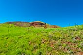 stock photo of golan-heights  - Minefield in the Golan Heights Early Spring - JPG