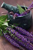 stock photo of purple sage  - mortar and pestle with fresh sage flowers  - JPG