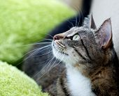 foto of crop  - Cat portrait close up - JPG
