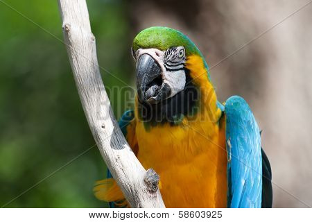 Macaw Perched On A Tree