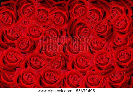 Beautiful Red Roses petals
