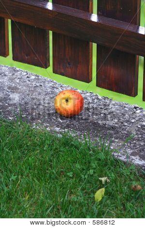 Jabolko Na Skarpi _ IMG_5938