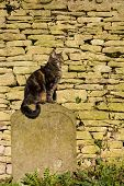 stock photo of tombstone  - Tabby cat sunning itself sat on an old worn tombstone - JPG