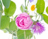 stock photo of english rose  - English ancient a pink rose with wild flowers