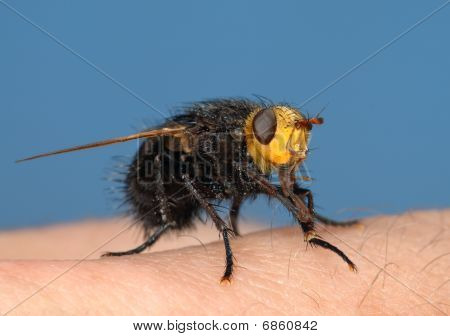 Black Fly On My Finger