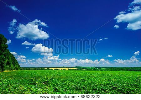 Wonderful Cultivated Soy Field By Early Summer.