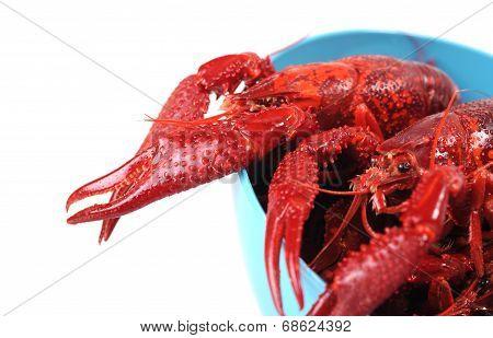 Boiled Craw Fish