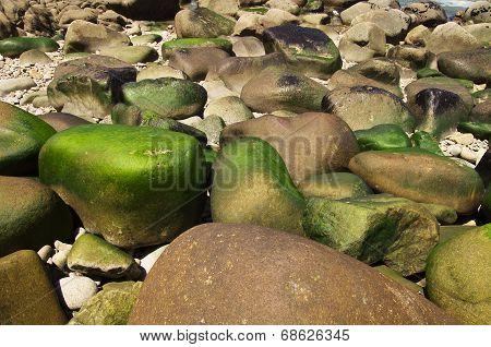 Round Seamoss Rocks