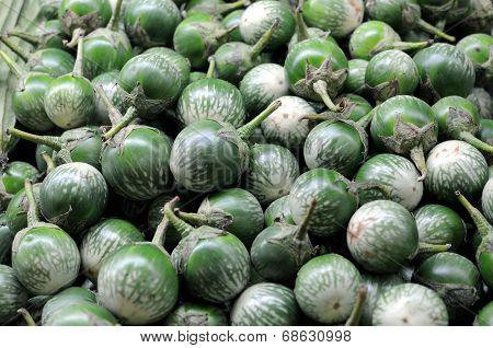 Solanum Macrocarpon
