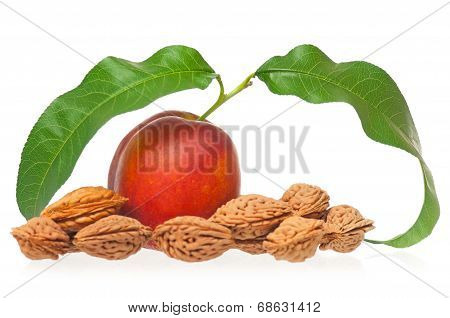 Ripe Nectarine