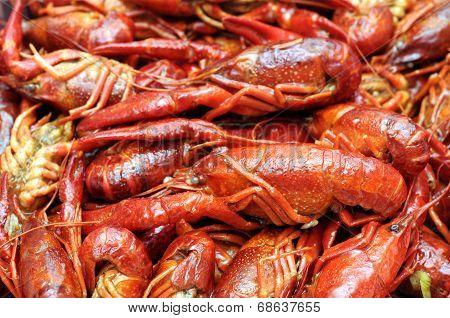 Closeup Boiled Craw Fish