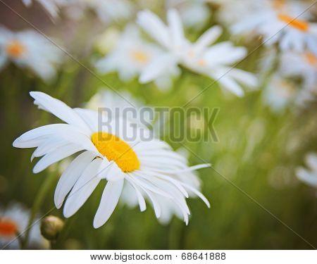 a bunch of pretty daisy like flowers