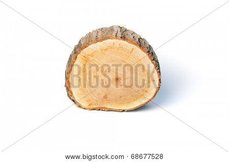 Tree stump, isolated on white background