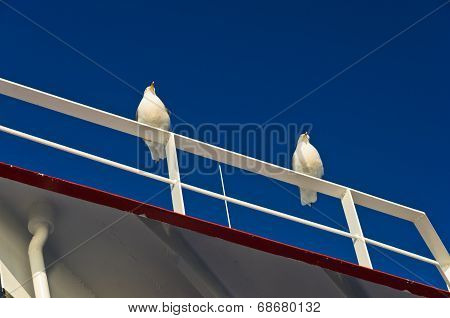 Seagulls as a deck passangers on a ferry to Thassos island