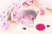 image of ferrets  - Female ferret baby in the doll house sleeps on a little bed - JPG