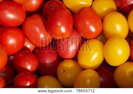 Tomato's Background
