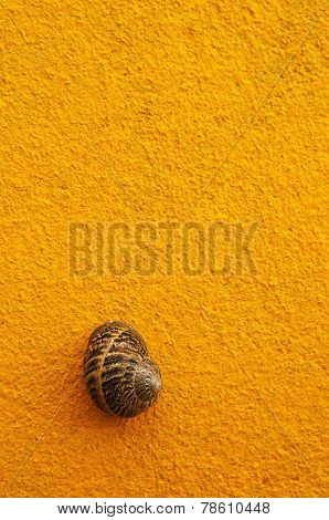 Brown Snail Shell On Yellow Wall