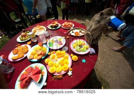 Food For Monkey in Thailand Monkey Party.