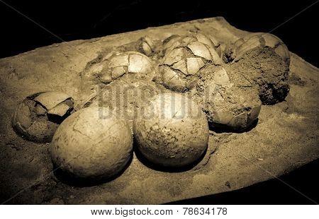 Dinosaur Eggs In The Nest