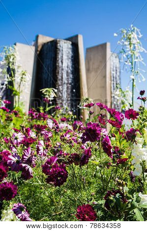 Beautiful Purple Flowers With High Rise Condo In Background