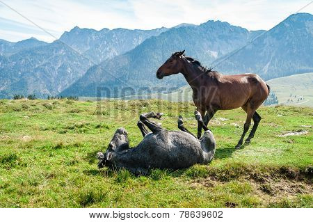 Two Horses In The Alps