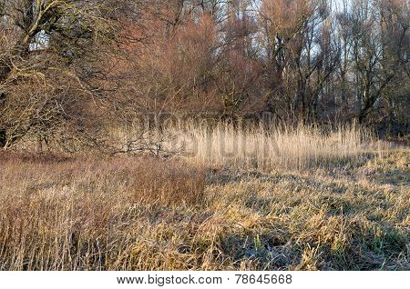 Winter Floodplain Forest
